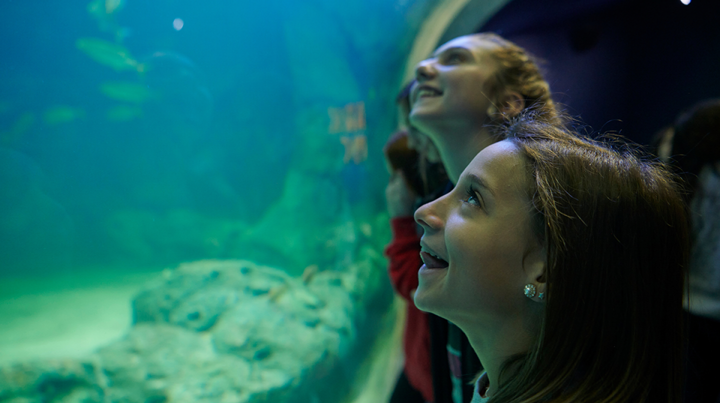 Seventh graders Sophia Zouglas (front) and Sophie Baliva enjoy one of the many exhibits at the St. Louis Aquarium.
